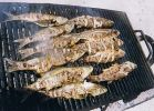 grilled fish Djerba