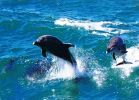 delfíni Djerba
