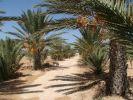 Houch Mohtedi Djerba
